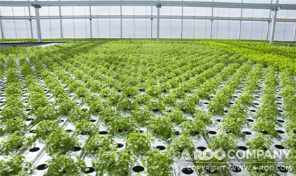 VEFI® Hydroponic Growing Systems being used in a large greenhouse.
