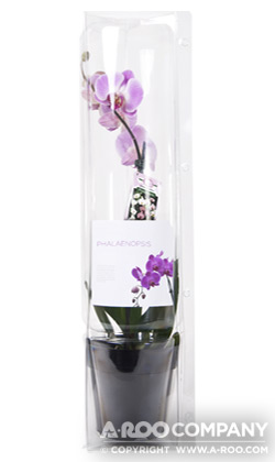 voges orchid container